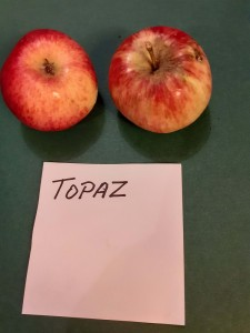 Apfelsorten015