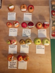 Apfelsorten016