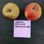 Apfelsorten017