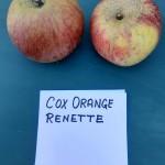 Apfelsorten018