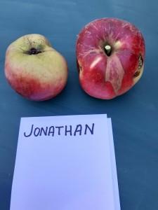 Apfelsorten019