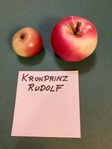 Apfelsorten024